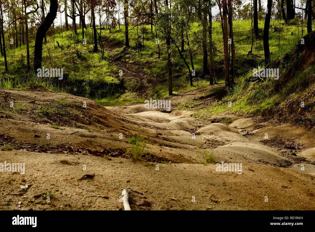 A dirt fire access road in Mia Mia State Forest, Queensland, Australia Stock Photo