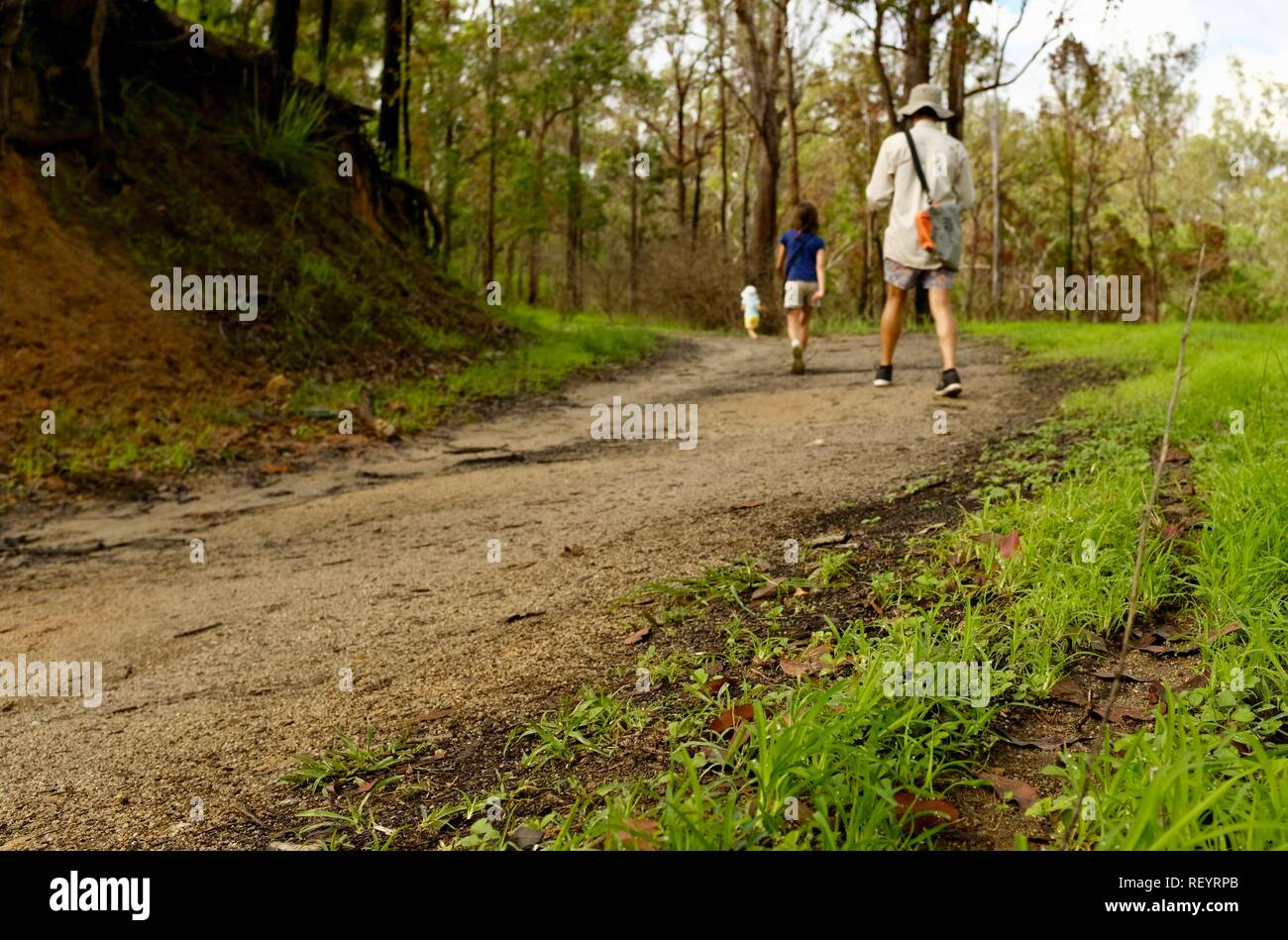 Children and man walking along a four wheel drive track through a forest, Mia Mia State Forest, Queensland, Australia - Stock Image