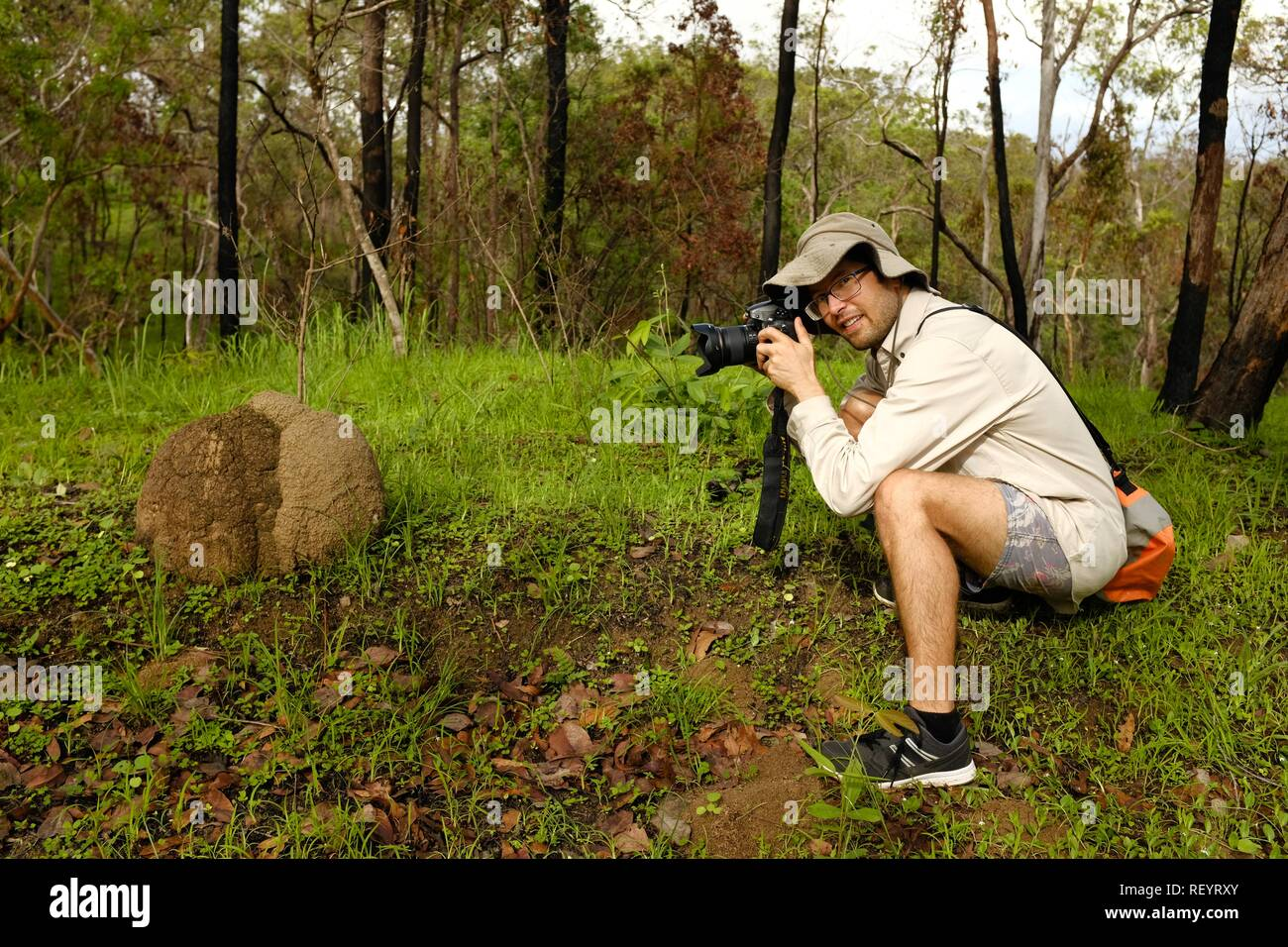 An awesomely good looking man taking a photograph of a termite hill in nature, Mia Mia State Forest, Queensland, Australia - Stock Image