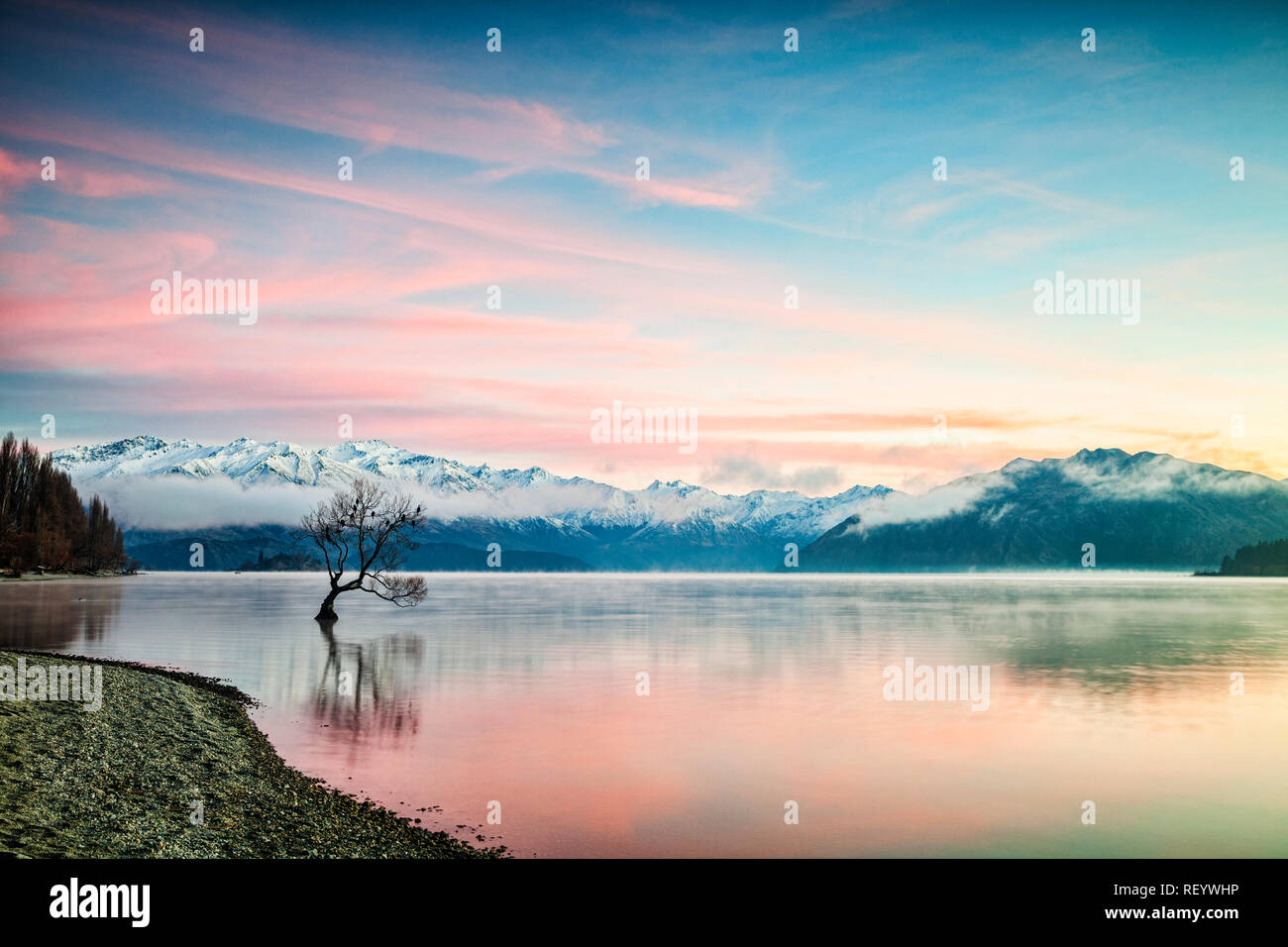 Winter at Lake Wanaka, Otago, New Zealand, with birds roosting in the single tree and mist rising from the water. Stock Photo