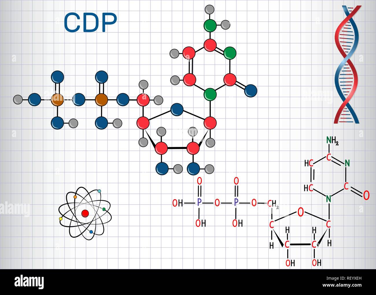 Cytidine diphosphate (CDP) molecule, it is nucleoside molecule. Structural chemical formula and molecule model. Sheet of paper in a cage.Vector illust - Stock Image