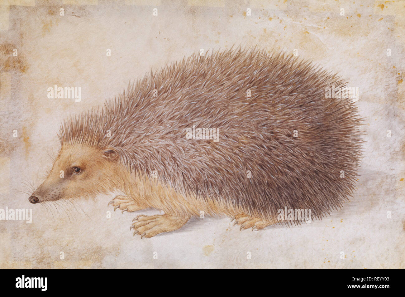 Working Title/Artist: Hoffmann, A Hedgehog   Department: Drawings & Prints Culture/Period/Location:  HB/TOA Date Code:  Working Date:  photography by mma, DP120747.tif retouched by film and media (jnc) 8_29_08 - Stock Image