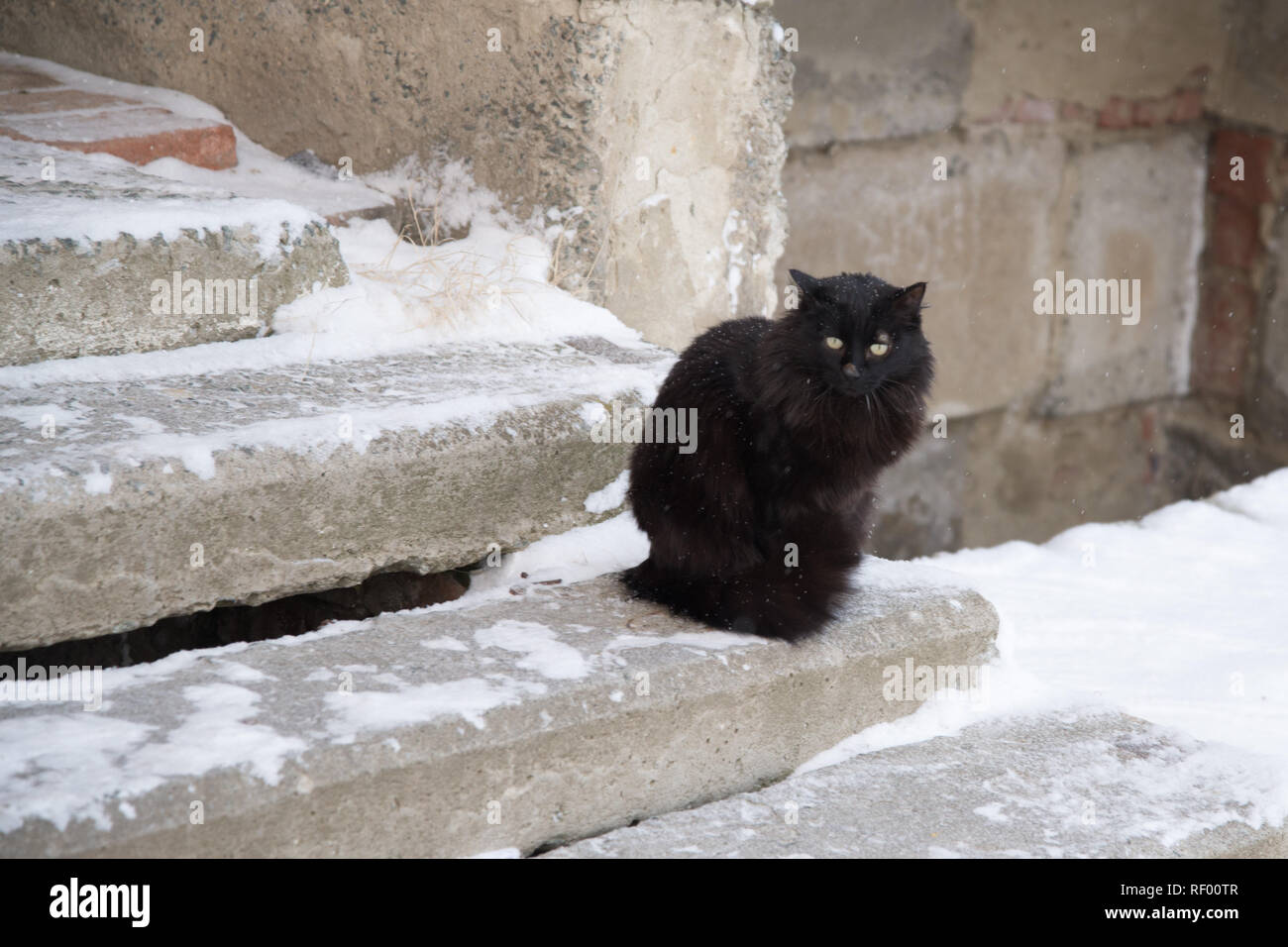 Abandoned street cats, animal abuse, sadness  Black fluffy cat on a
