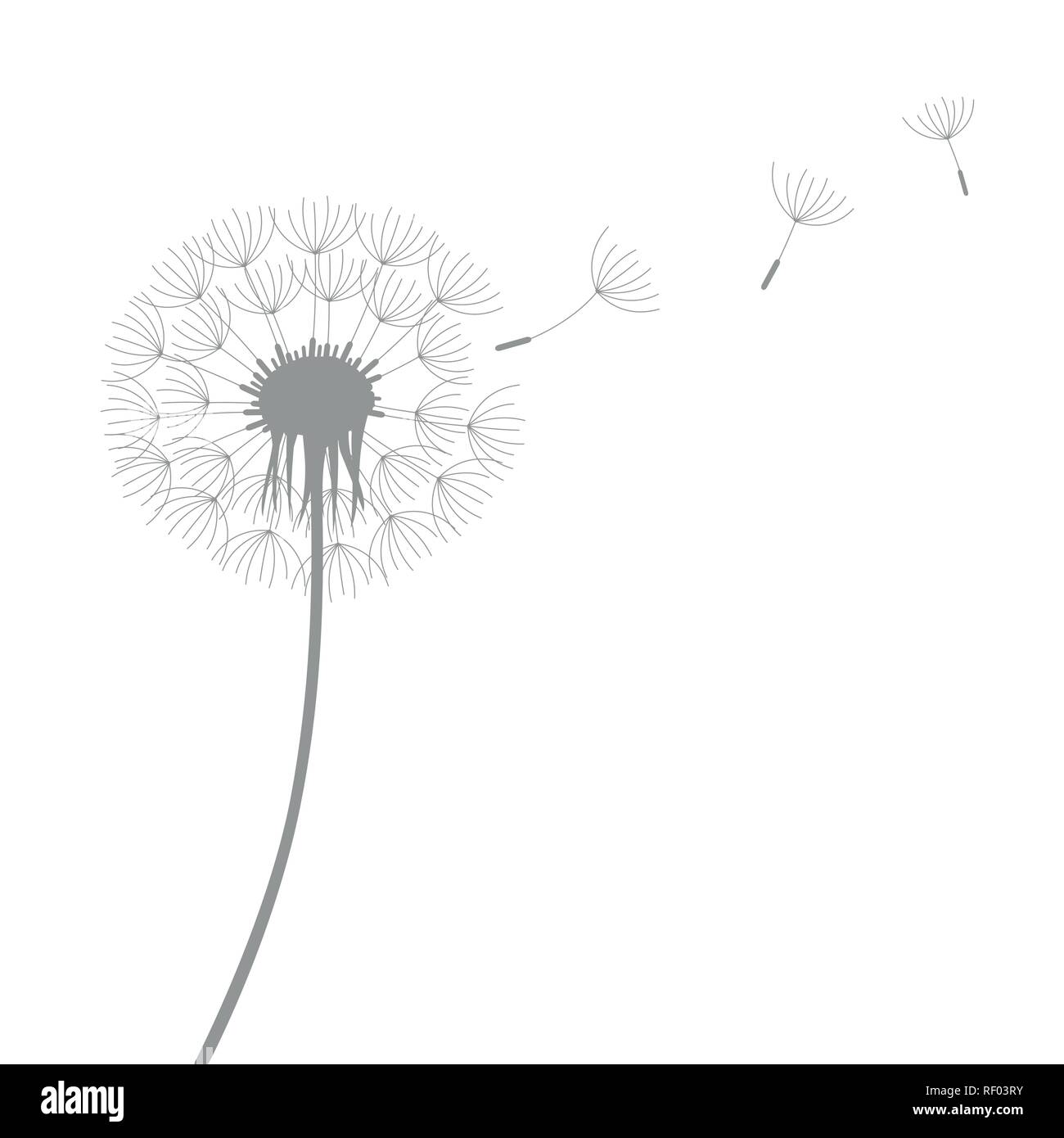 dandelion silhouette with flying seeds isolated on white background vector illustration EPS10 - Stock Vector