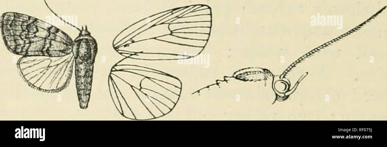 Catalogue of Lepidoptera Phalaenae in the British Museum. Supplement.  Moths. 574 NocruiD . 5eaba329e84