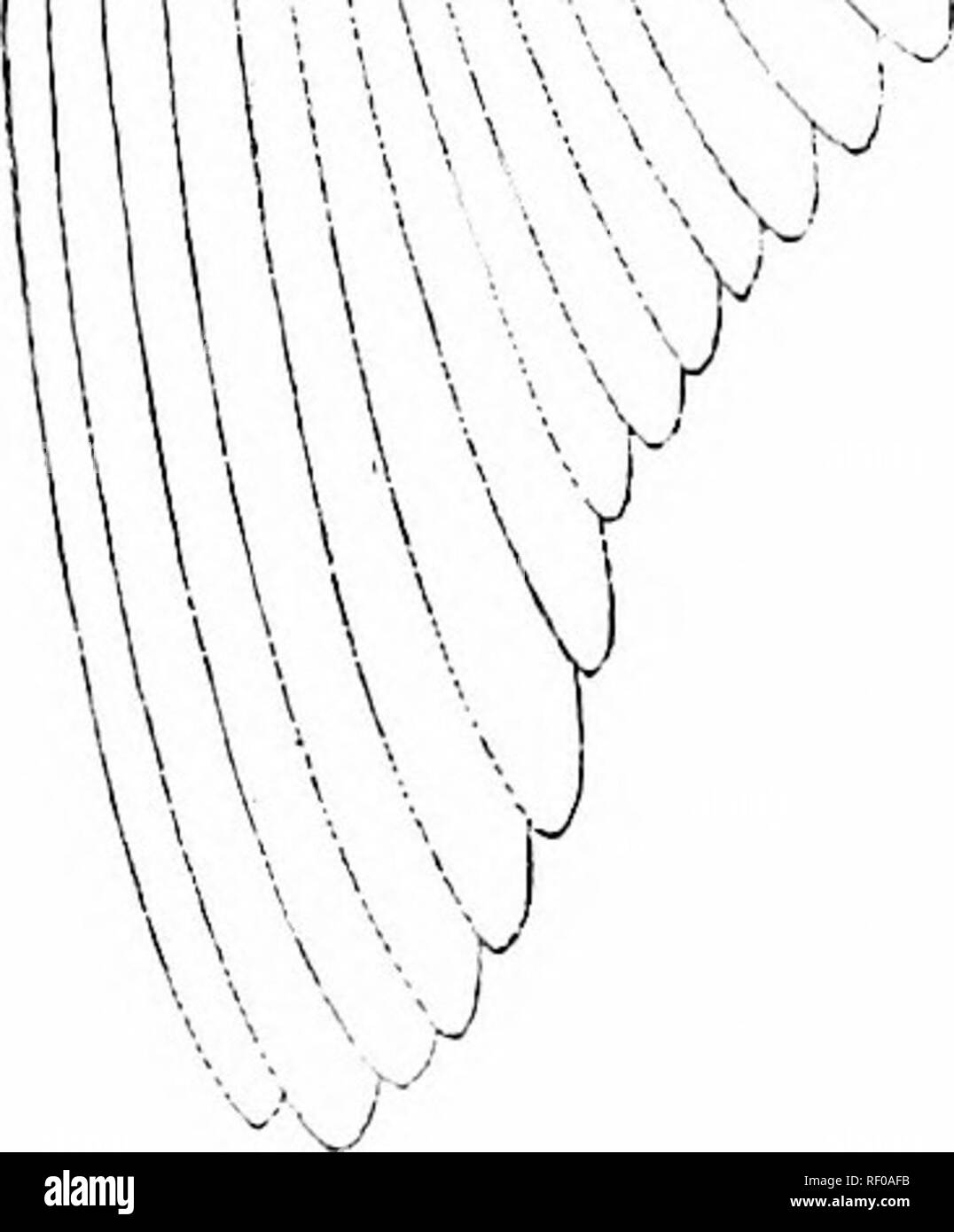 """. A manual of zoology. V7^ v , z/.apl      v hf addg.. pr.dg.rmg [//]. >â XV2/ UAy^#^» UV6j