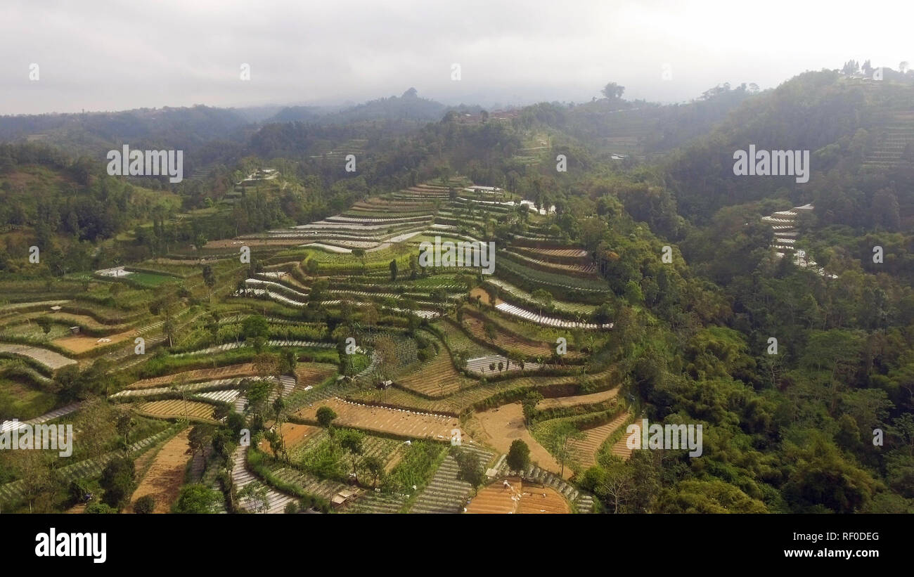 agricultural land in mountains rice terraces, fields with crops, trees. Aerial view farmlands on mountainside Java, Indonesia. tropical landscape - Stock Image