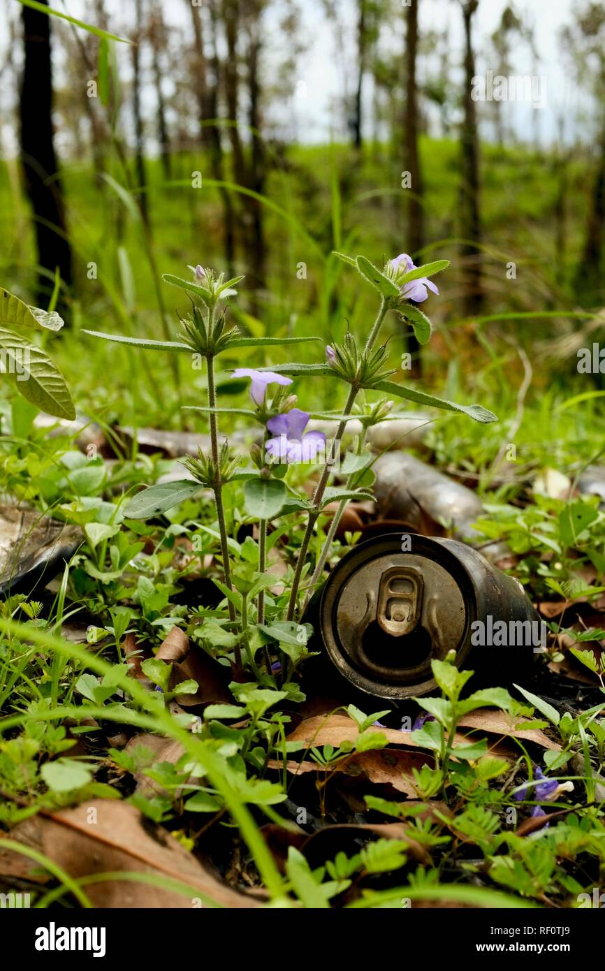 Grass and plants taking back nature from rubbish, Mia Mia State Forest, Queensland, Australia - Stock Image