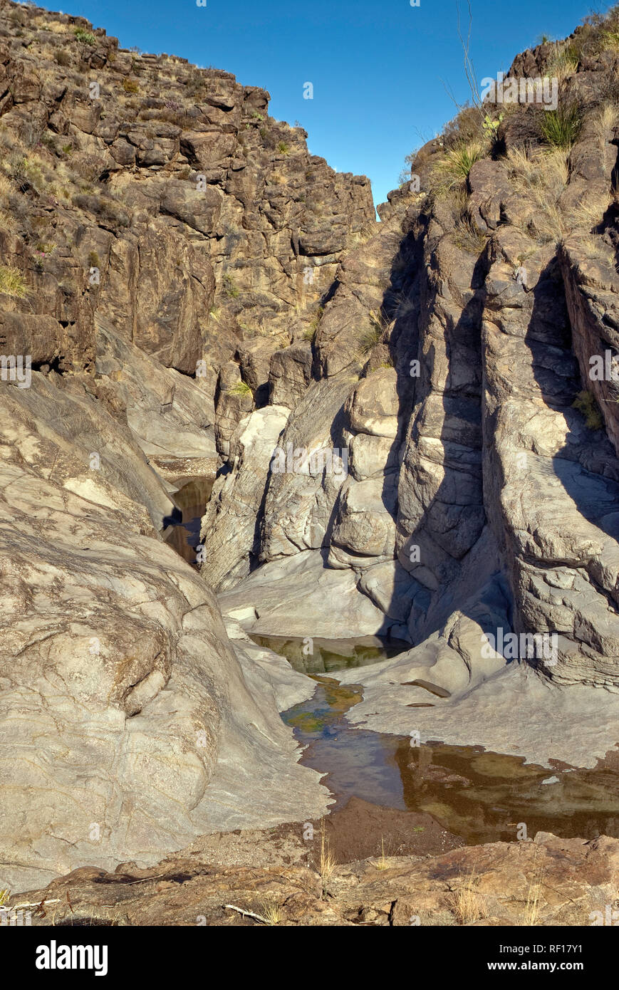 Water pools of Cinco Tinajas, Chihuahuan Desert, Big Bend Ranch State Park, Texas, USA - Stock Image