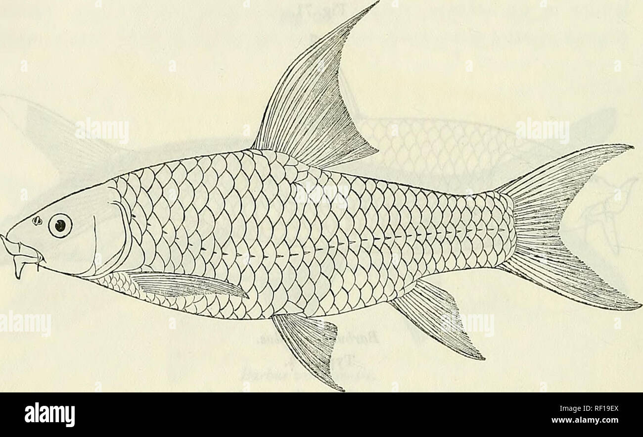 Catalogue of the fresh-water fishes of Africa in the British