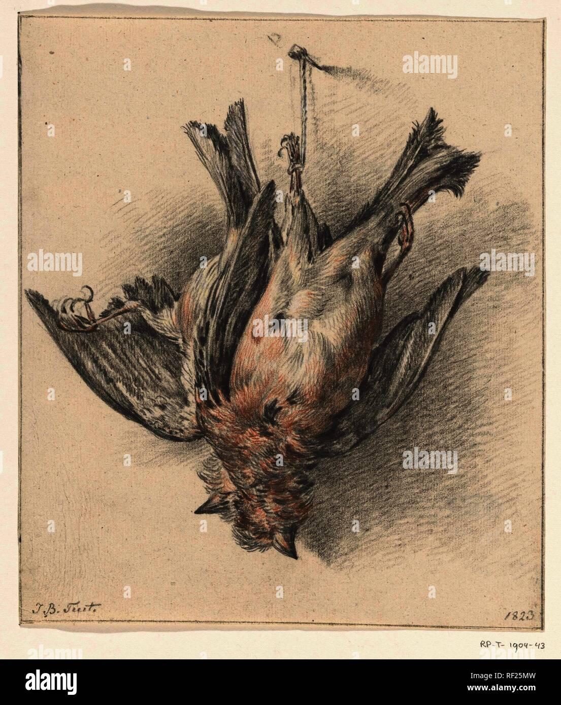 Two Dead Birds Hung On A String Draughtsman Jean Bernard