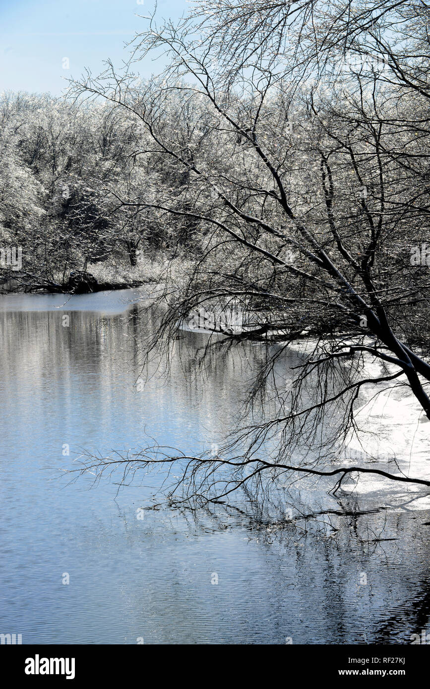 Ice covered trees on banks of Mill River.  New Haven, CT.  January 22, 2018 - Stock Image