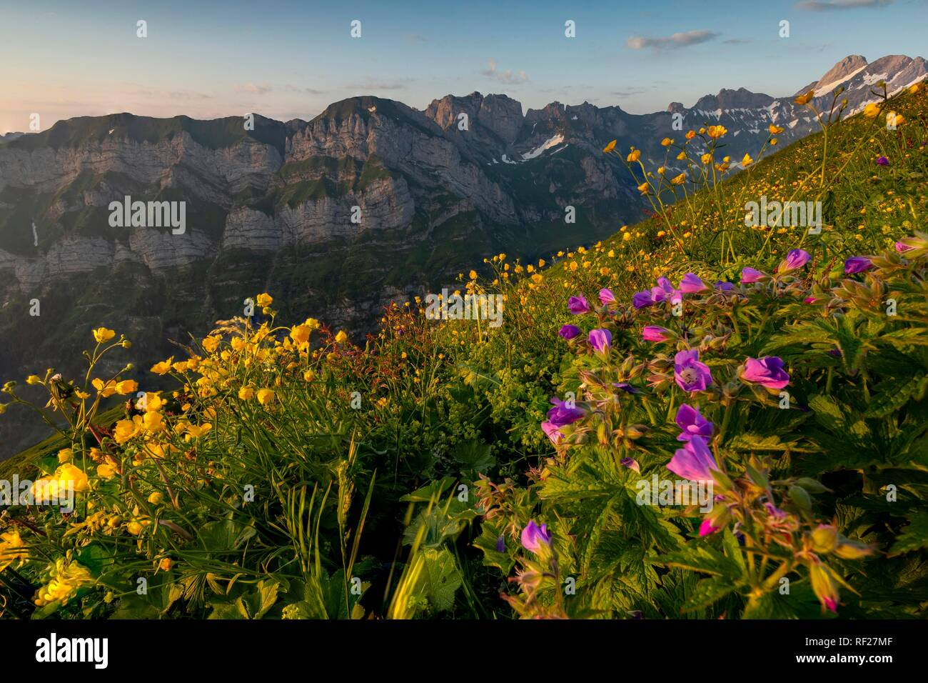Summery mountain meadow with Schrennen Bergstock, with Appenzeller Land in the background at sunrise, water meadows, Appenzell - Stock Image