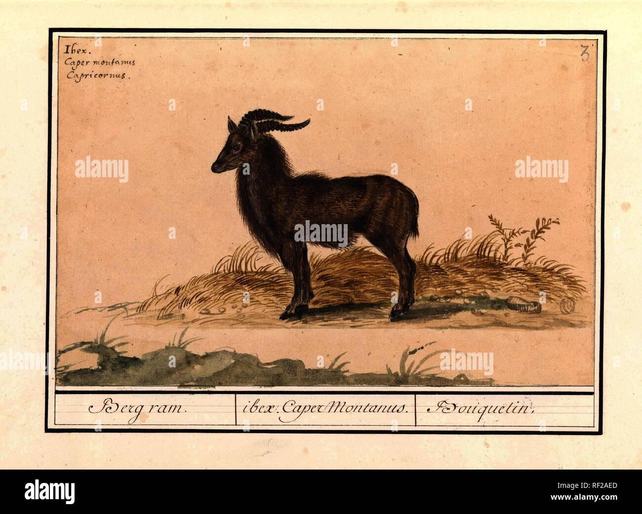RAM dating Steenbok