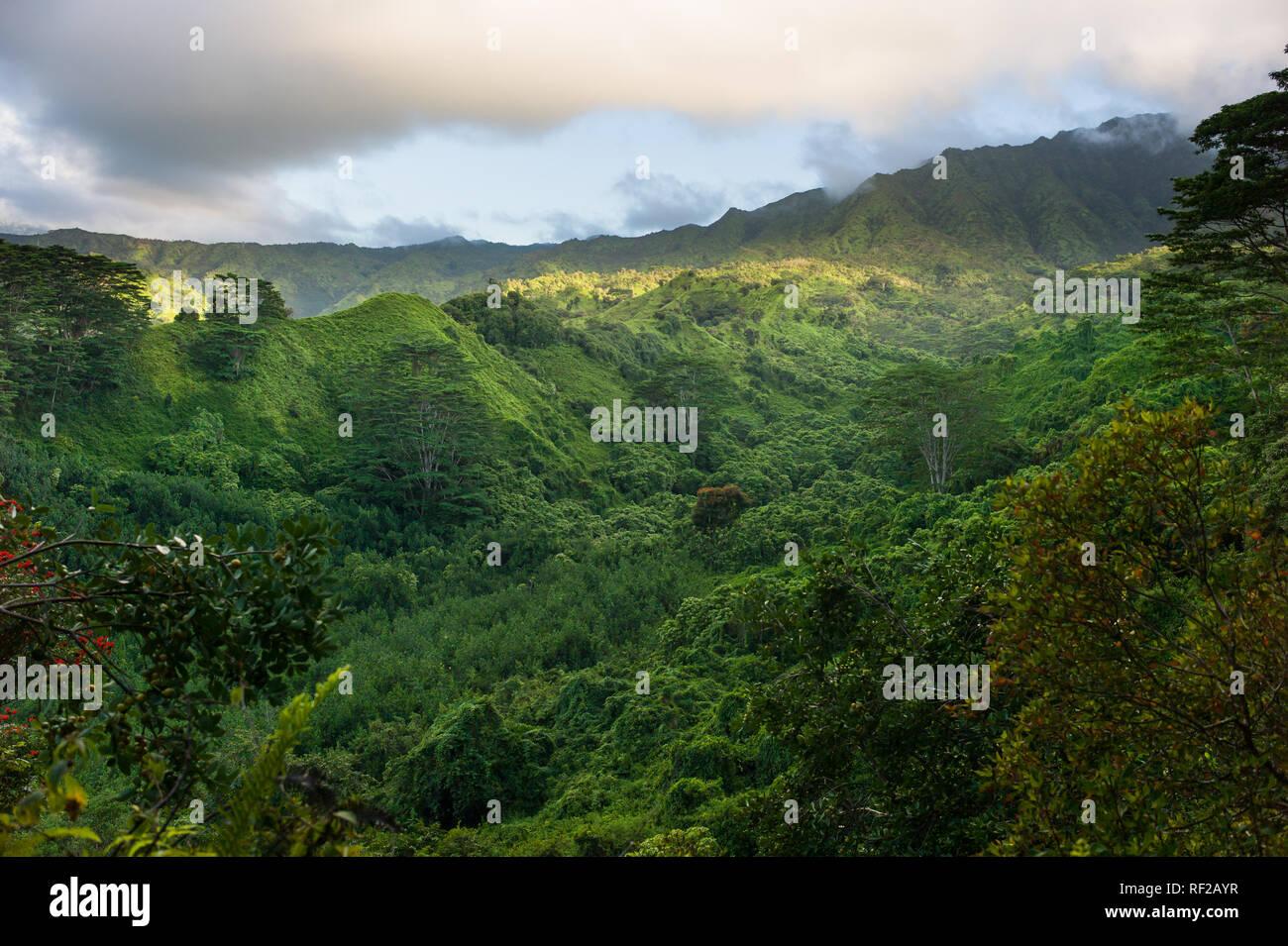 The Kuilau Ridge Trail explores Kauai's scenic mountainous interior in Hawaii, United States. - Stock Image