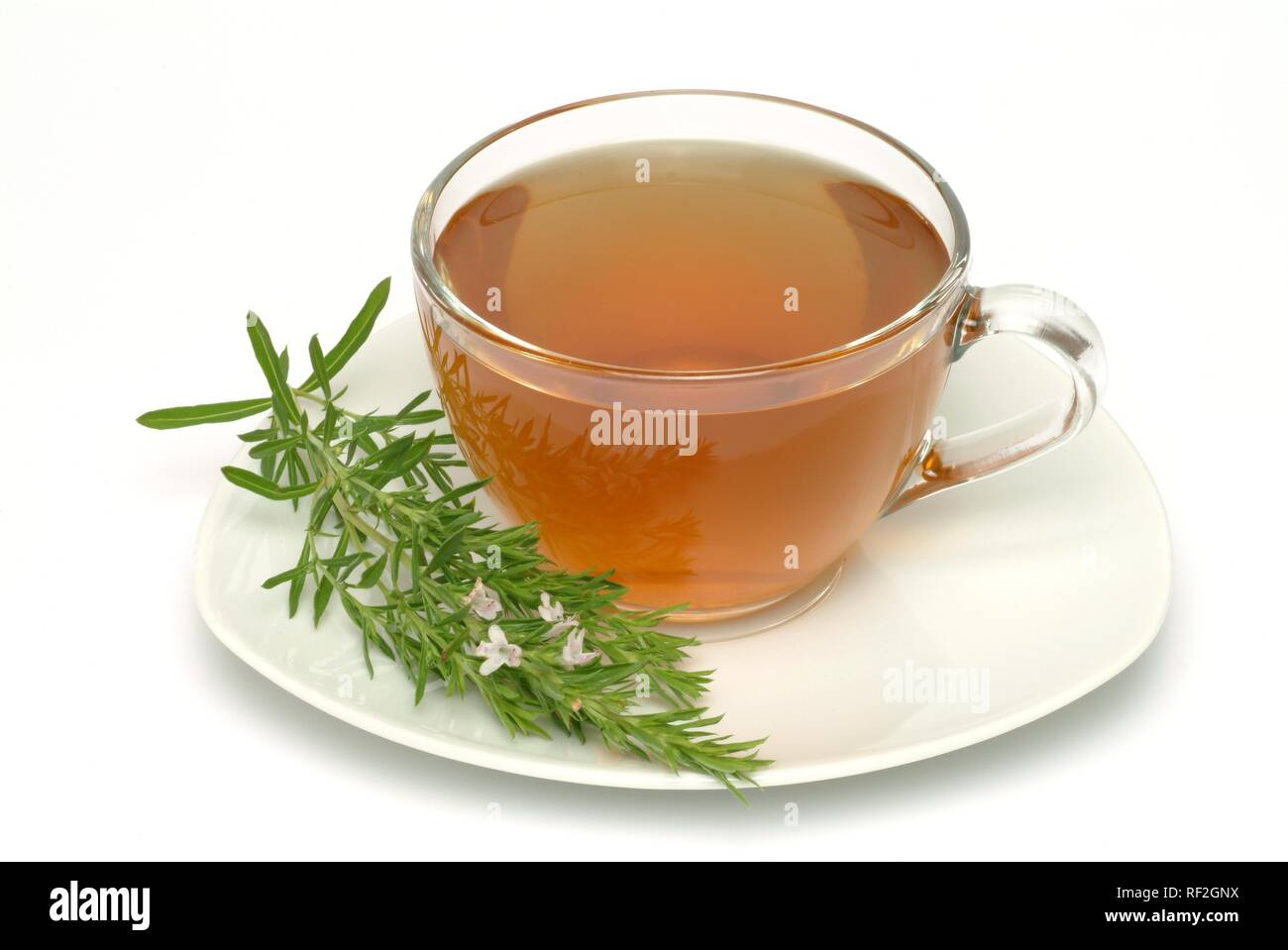Summer Savory (Satureja hortensis), herbal tea - Stock Image