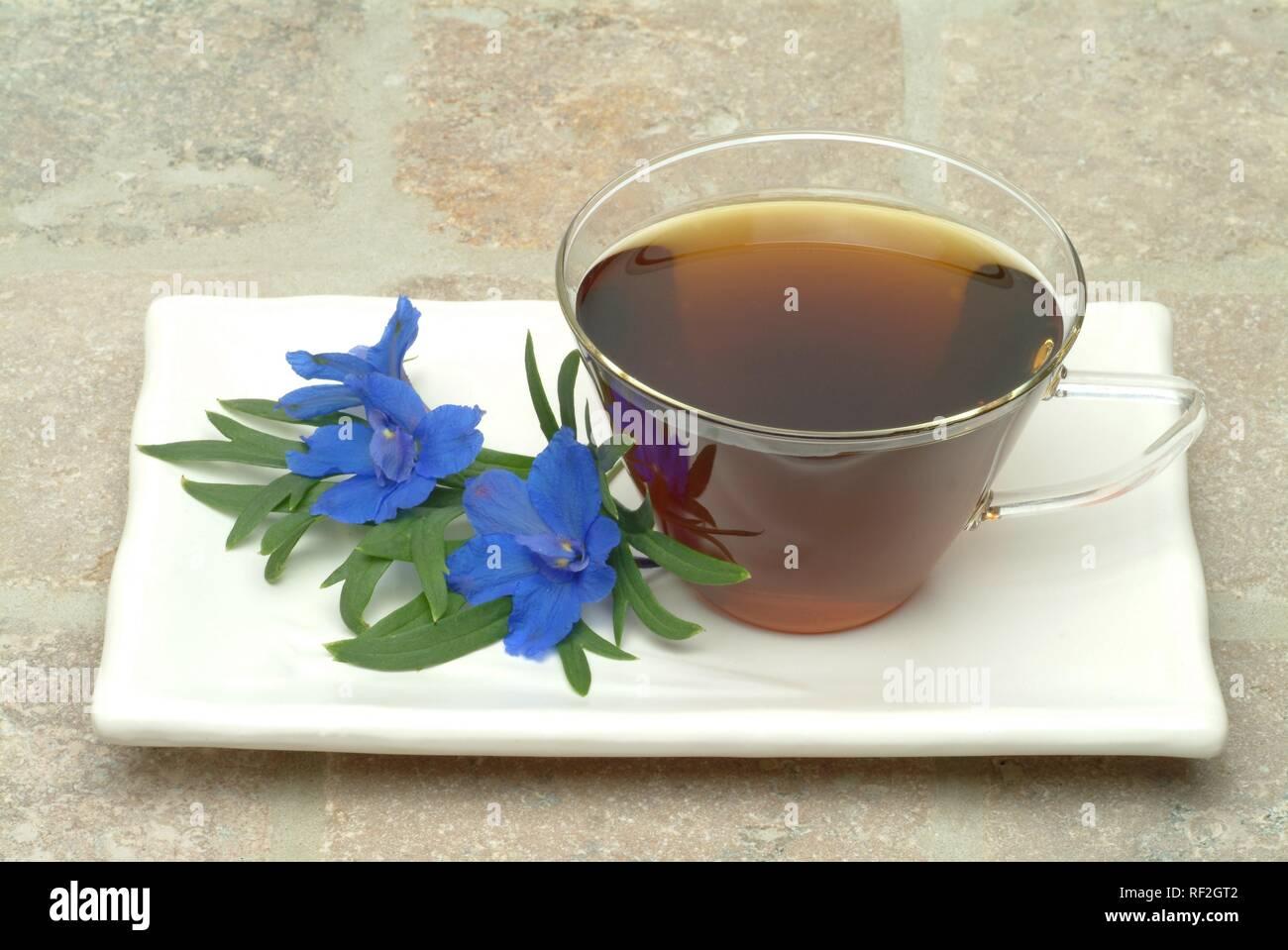 Forking Larkspur (Delphinium consolida, Consolida regalis), herbal tea - Stock Image