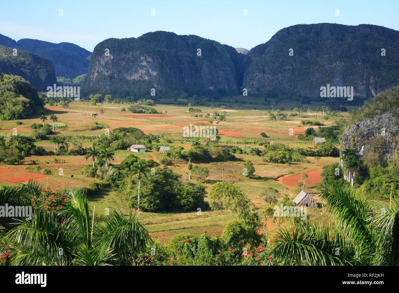 Valle de Vinales and the Mogotes chalk stone hills, Cuba, Caribbean - Stock Image