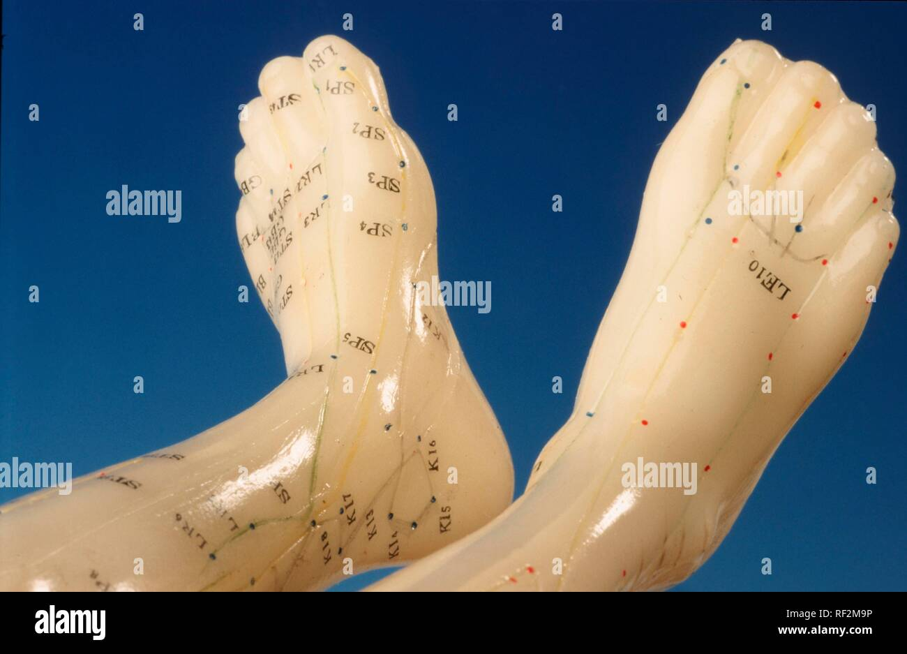 Acupuncture Model Points Stock Photos & Acupuncture Model Points
