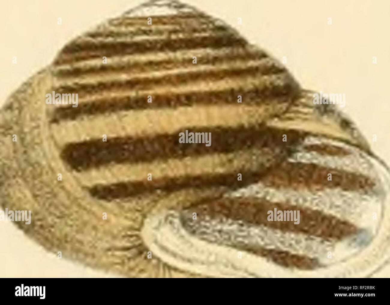 397 stock photos \u0026 397 stock images page 12 alamycatalogo iconografico y descriptivo de los moluscos terrestres de españa, portugal y las baleares