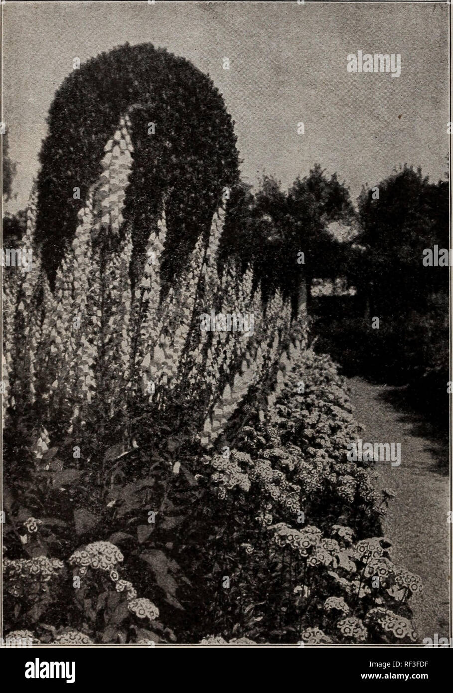 Catalogue 1915 Seeds Bulbs Shrubs Seeds Catalogs Vegetables