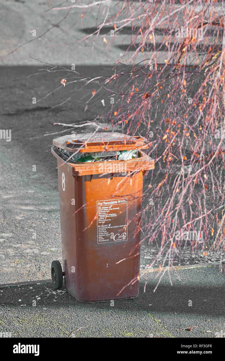 A brown colored dry recyclable full waste bin on a roadside kerb waits to be emptied on a sunny winter day. - Stock Image