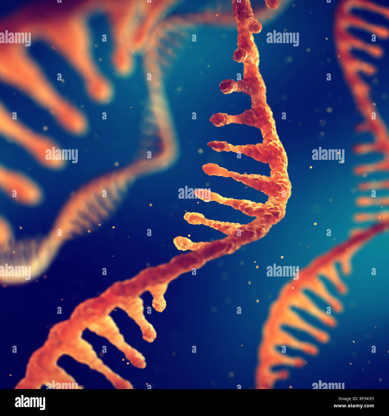 Single strand ribonucleic acid, RNA research and treatment - Stock Image