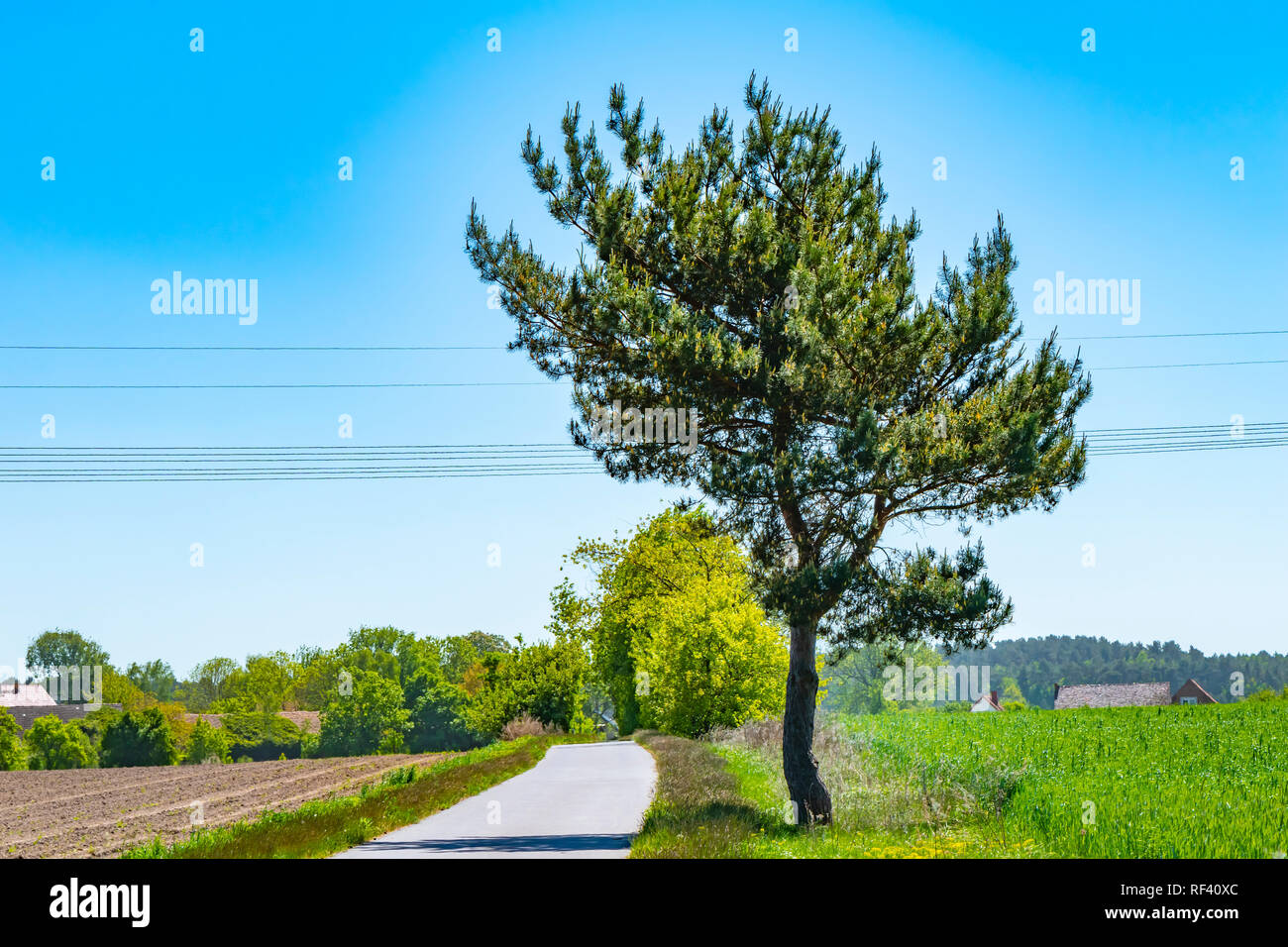 View to a path for cyclists and skaters in the local recreational area 'Flaeming-Skate' near Berlin, Germany. - Stock Image