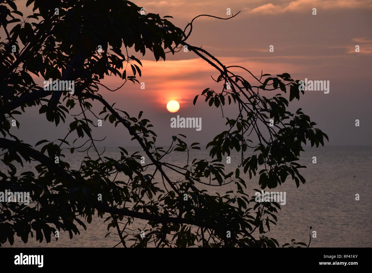 Sun going down behind the Branches of a tree - Stock Image