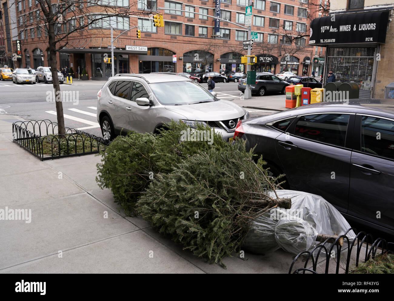 Curbside Christmas tree disposal, NYC - Stock Image