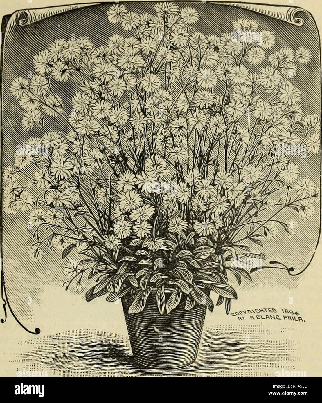 Plants, seeds, bulbs, and flowers : 26th year 1898  Nursery