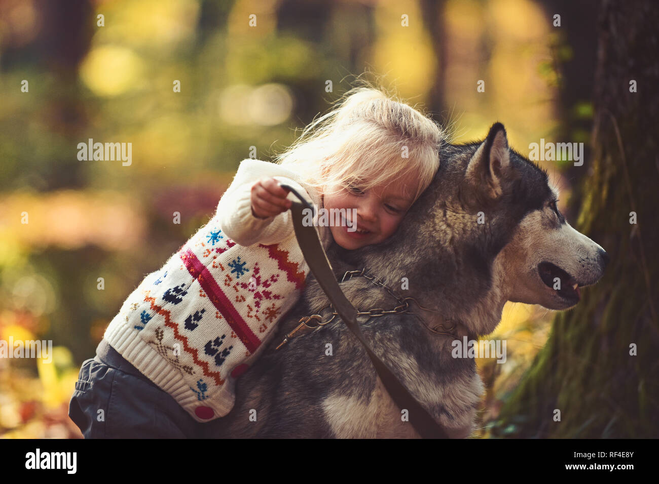 Happy little girl with her dog husky - Stock Image