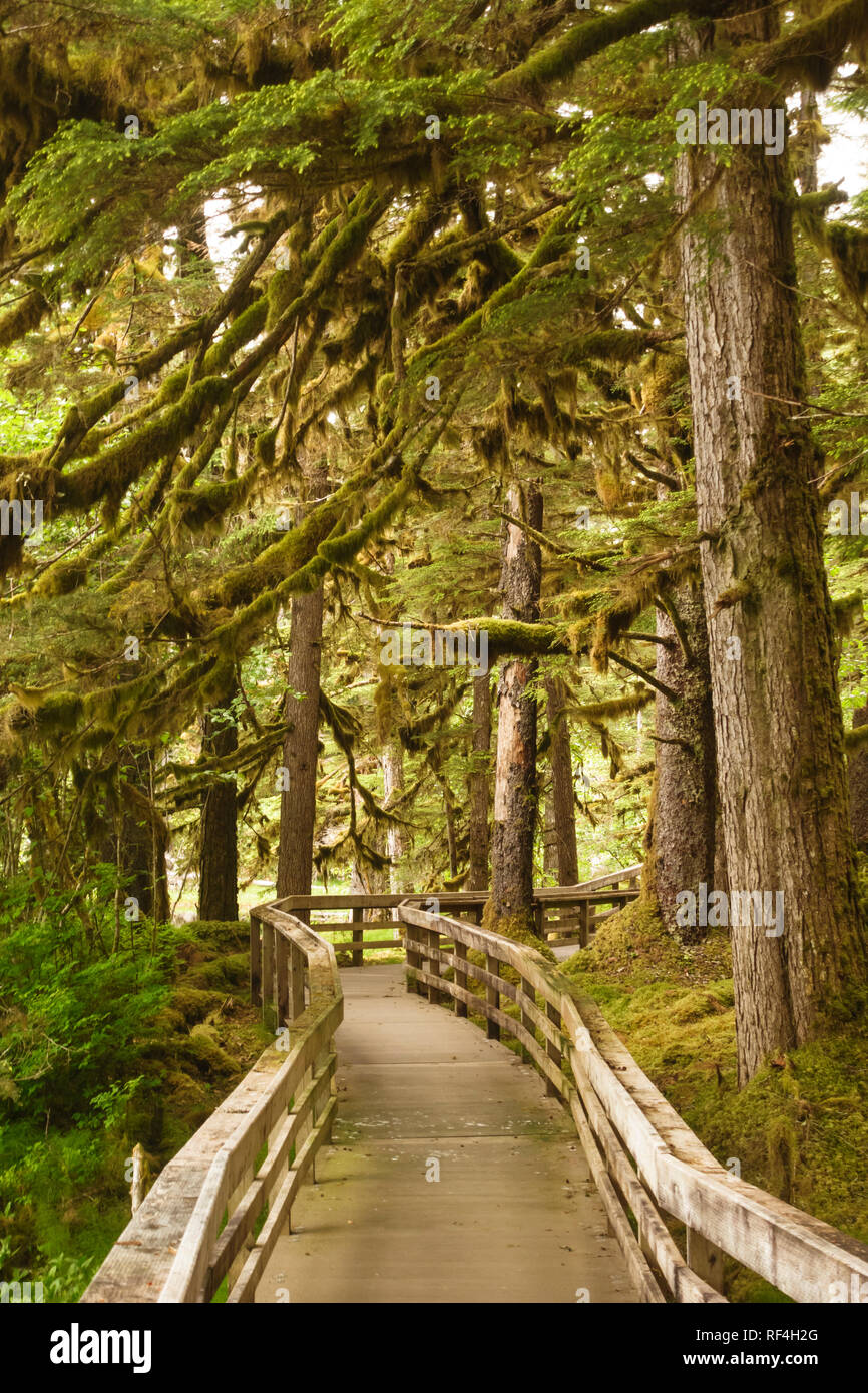 A boardwalk through the trees on the Forest Loop Trail near Bartlett Cove, Glacier Bay National Park, Alaska is accessible to handicapped people. - Stock Image