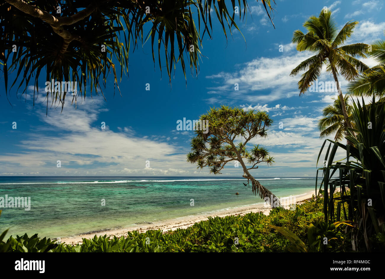 Beach with palm trees on the Kingdom of Tonga, south pacific island. - Stock Image