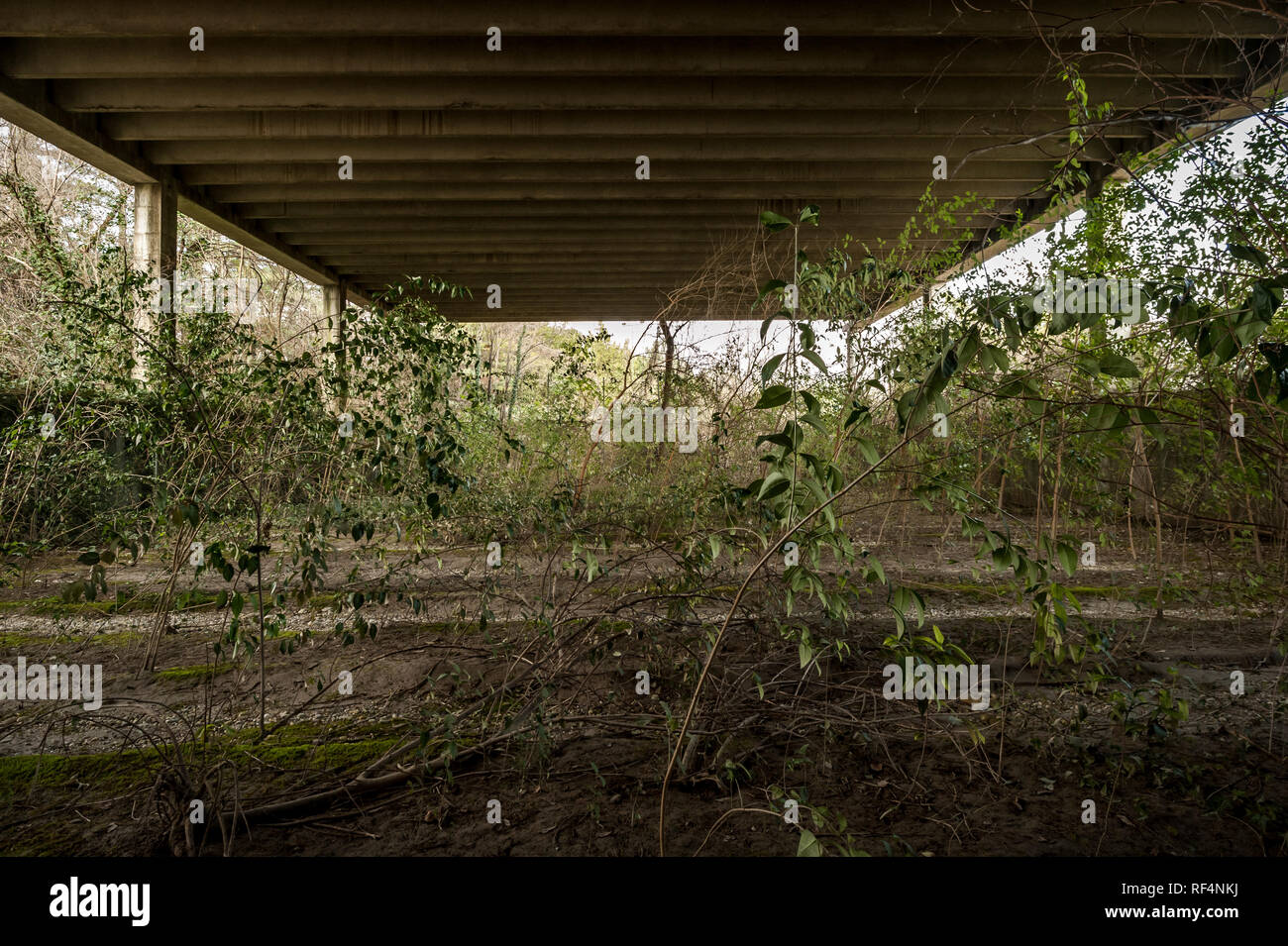 Abandoned shed with spontaneous natural vegetation growth - Stock Image
