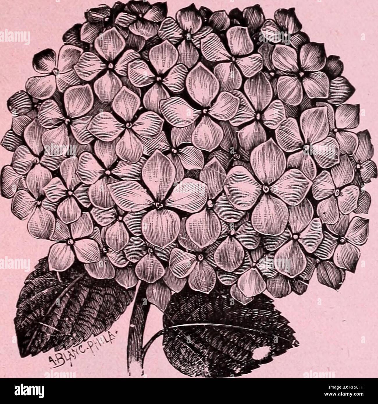Florists' wholesale price list plants, bulbs, seeds, etc  : from