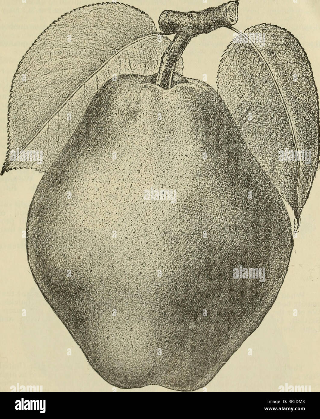Opinion you asian pear growers in virginia seems