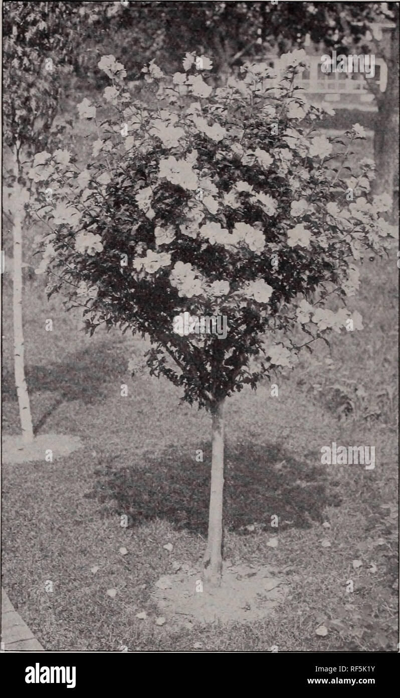 Catalogue Of Fruit And Ornamental Trees Small Fruits Shrubs