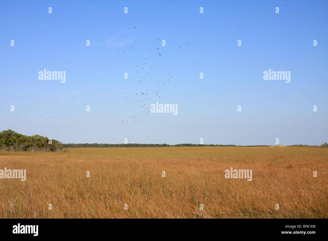 The Sawgrass Prairie of Everglades National Park, Florida. - Stock Image