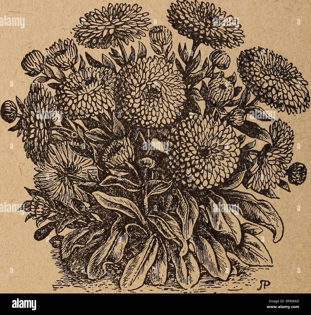 a576f509571c Nursery stock Pennsylvania Catalogs; Flowers Seeds Catalogs; Bulbs (Plants)  Catalogs. Large-flowered 6alendula. Mixed 4 pkts. 10 cts., 1 pkt. 3 cts.