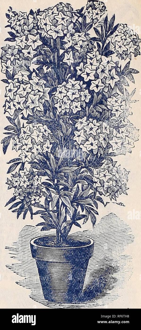Rare Florida Flowers And Fruits Nurseries Horticulture Florida