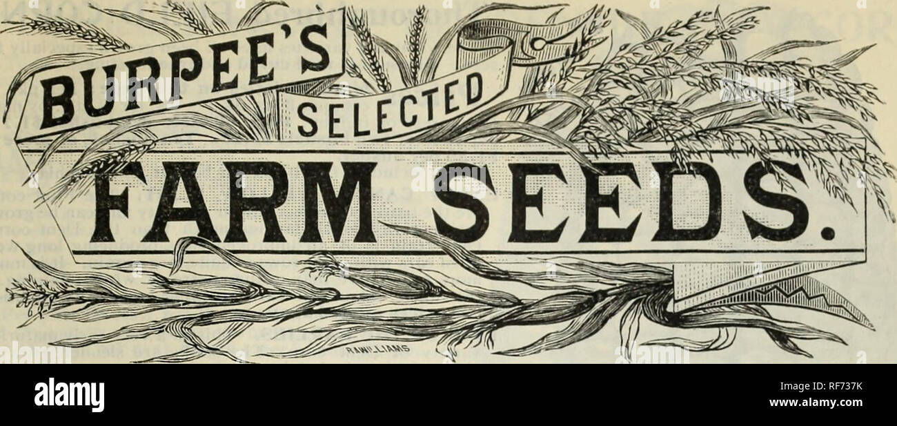 ". Burpee's 1902 farm annual : vegetable, flower and farm seeds. Nursery stock Pennsylvania Philadelphia Catalogs; Vegetables Seeds Catalogs; Flowers Seeds Catalogs; Bulbs (Plants) Catalogs. The "" Best Seeds that Grow"" are most essential to success in the farmer's field crops. Cheap seeds waste the time, labor, and fertilizers that have been used in preparing to plant the crops, and no aftercare in cultivation can bring profitable results. Our Farm Seeds are uniformly of the very best grade. They have been grown especially for seed, carefully selected and thoroughly cleaned. The price - Stock Image"