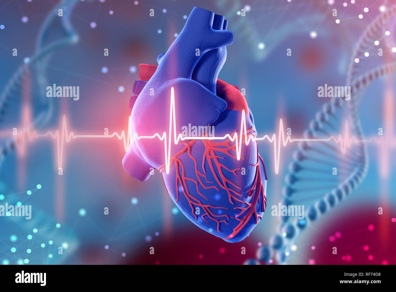 3d Illustration Of Human Heart And Cardiogram On Abstract