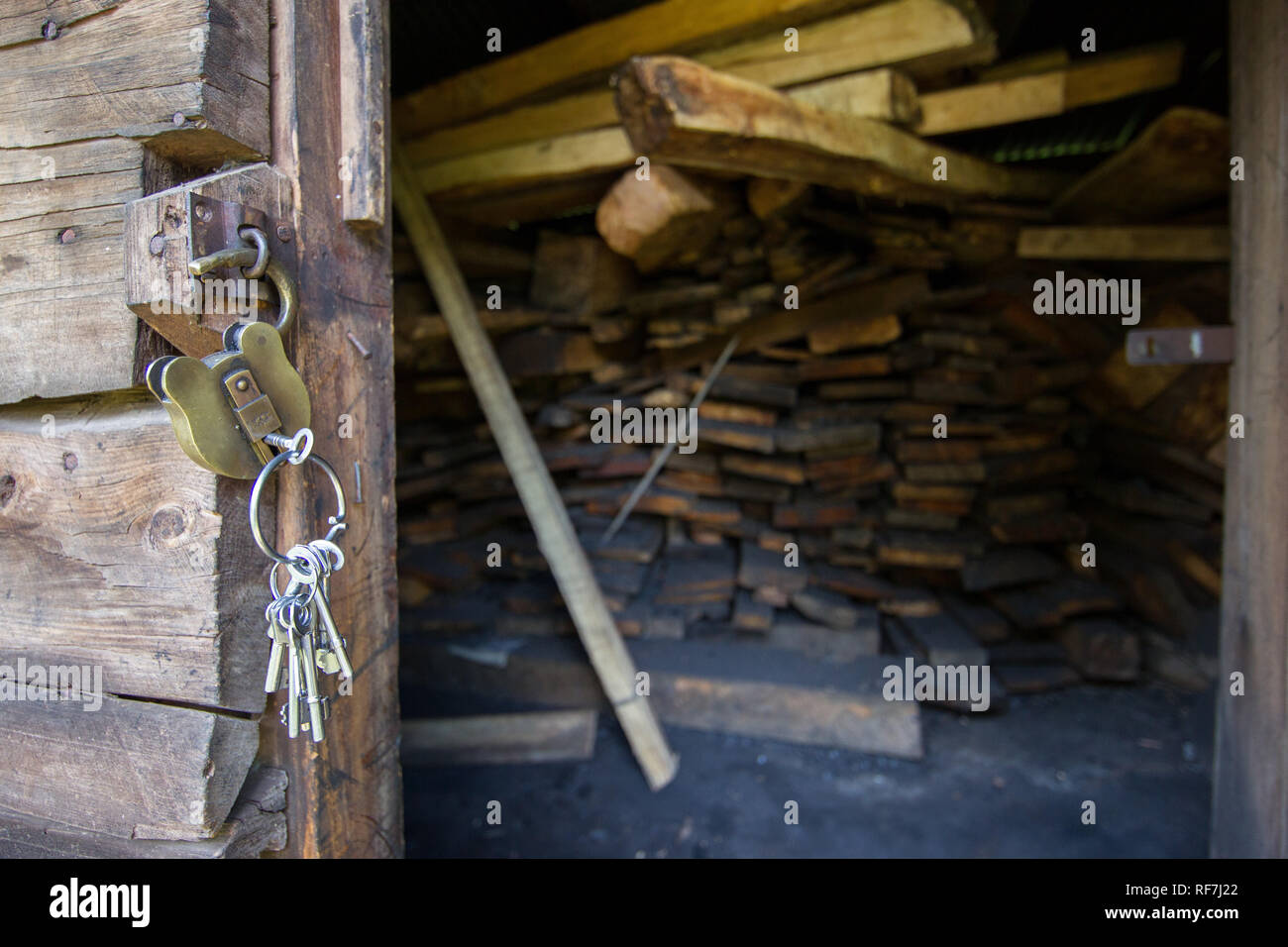 Confiscated planks of critically endangered Mulanje Cedar, Widdringtonia whytei, housed in a store room at Mount Mulanje, Malawi. - Stock Image