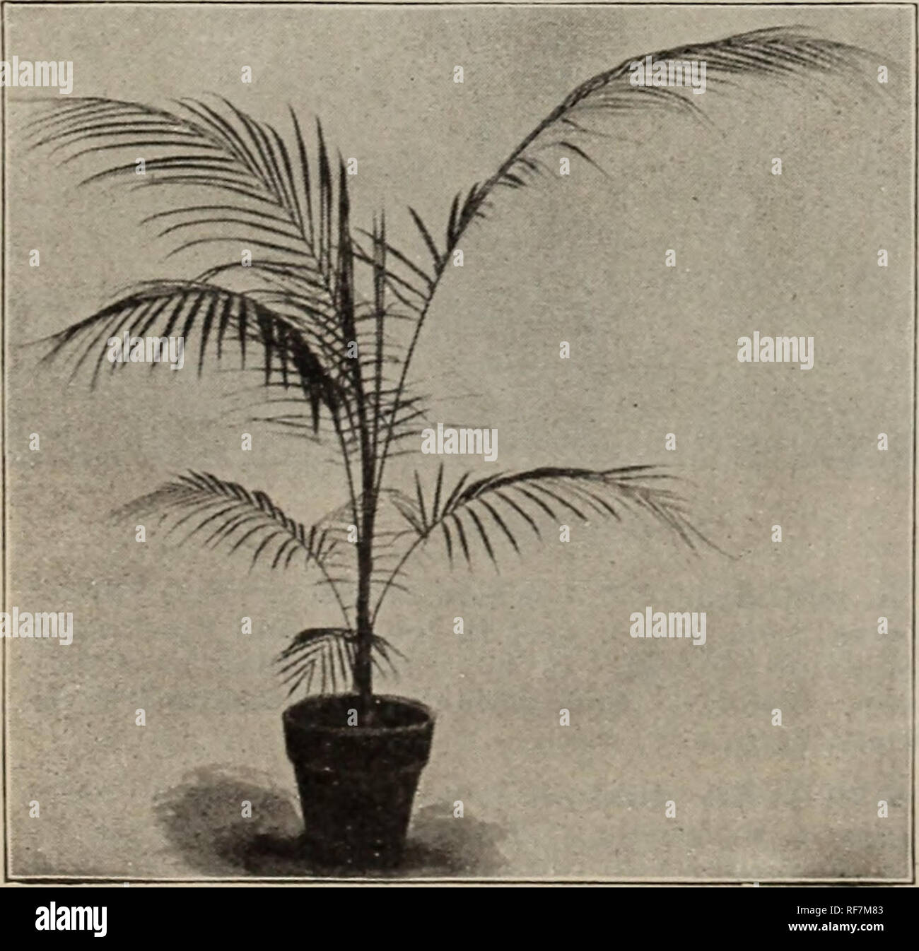 Native and exotic plants, trees & shrubs  Nursery stock