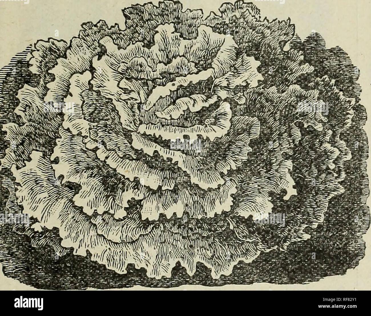 Vegetable, field and flower seeds : descriptive catalogue