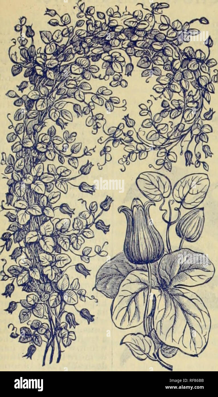 c259813ff51 Nurseries (Horticulture) Florida Catalogs  Flowers Catalogs  Plants