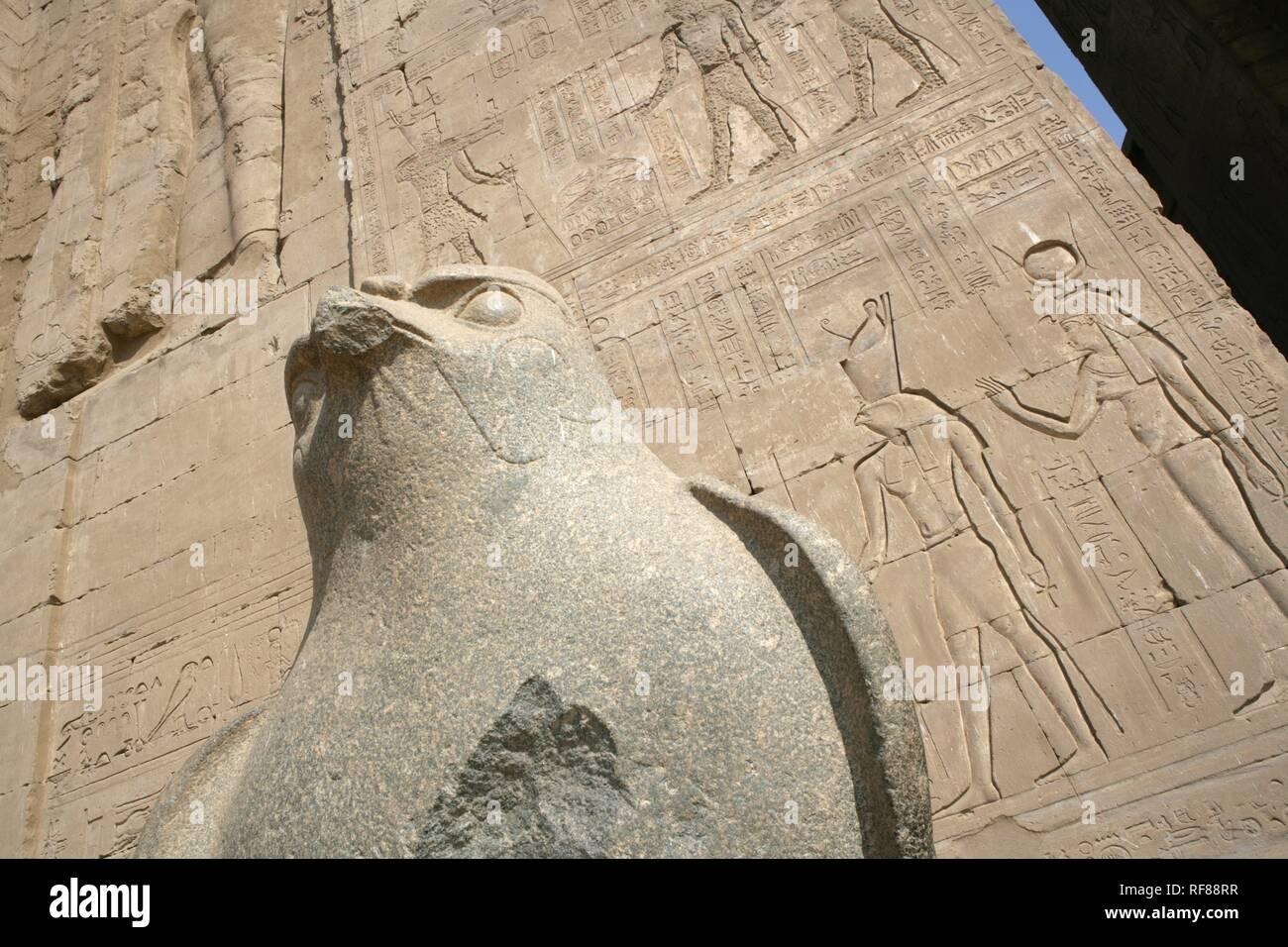 Horus (falcon god) statue at the Temple of Edfu, Edfu, Egypt, Africa Stock Photo