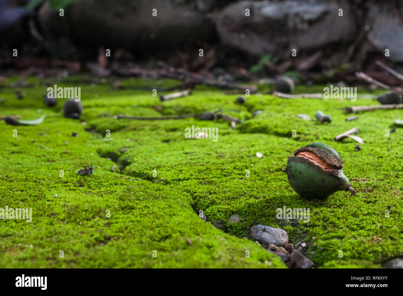 Exotic fruit in macro photo on green moss - Stock Image