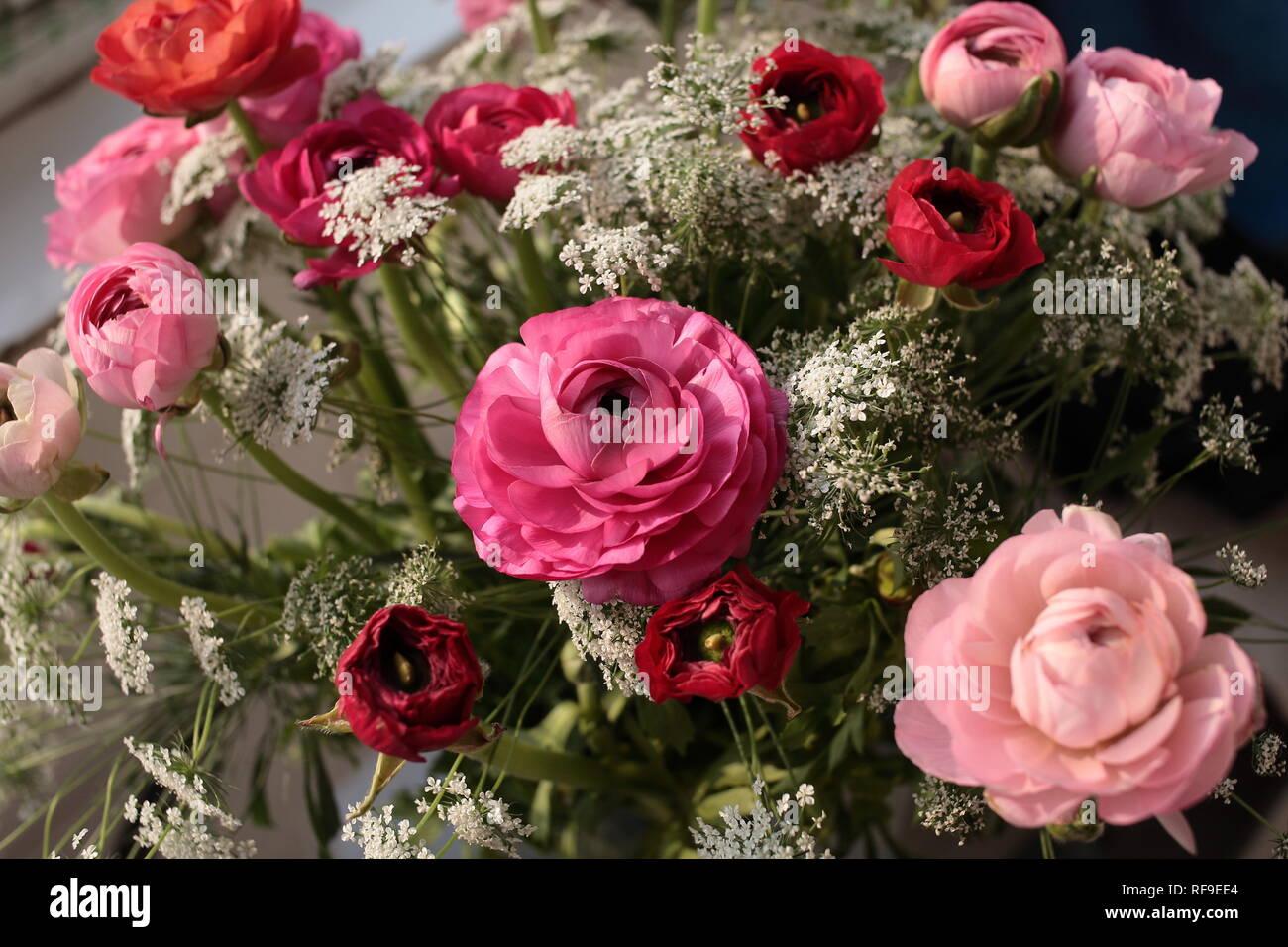 Peonies Flowers Purple Peony Stock Photos Peonies Flowers Purple